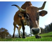 Livestock Event: Farm Health Planning Seminars – The Joint Farmer- Vet Approach